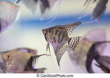 pescados del ángel