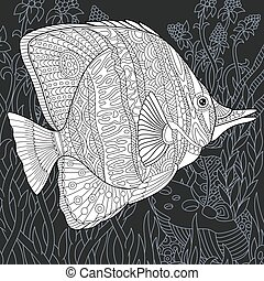 pesce farfalla, coloritura, pagina