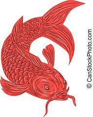 pesce koi, nishikigoi, carpa, disegno, rosso