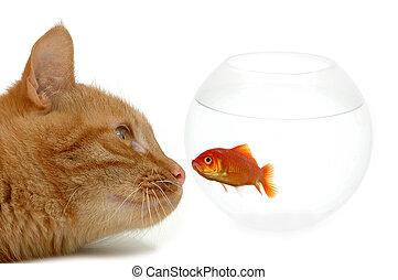 pesce rosso, ingenuo, strano, amici, o