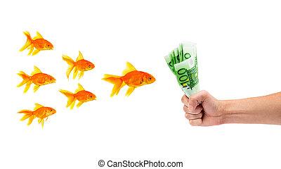pesce rosso, soldi