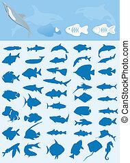 pesci, collezione