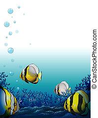pesci, mare, sotto