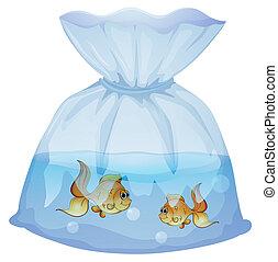 pesci, sacchetto, due, plastica