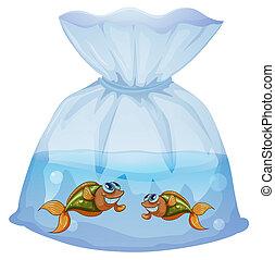 pesci, sacchetto
