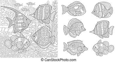 pesci tropicali, coloritura, pagine