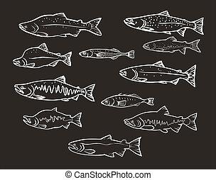 pesci, vettore, salmone, set: