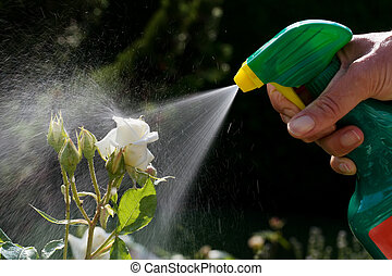 Pest control. Roses in the garden - Roses in a garden are...