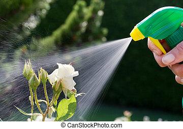 peste, control., rosas, en el jardín
