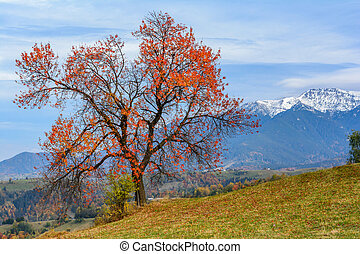 Pestera village,Romania:Autumn landscape with the Bucegi mountains
