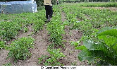 pesticide spray garden