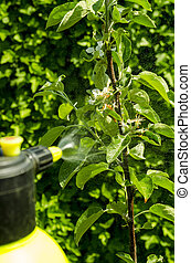 Pesticide treatment of garden flowers, trees and plants