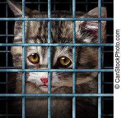 Pet adoption concept for orphaned and unwanted animals as cats or dogs caged in a shelter for pets represented by a sad cute kitten behind metal prison bars.