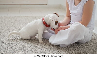 Pet and dog concept. Cute Little girl playing with a puppy...