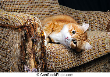 Pet and furniture - As our beloved pets are destroying the...