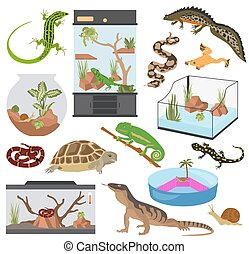 Pet appliance icon set flat style isolated on white. Reptiles and amphibians care collection. Create own infographic