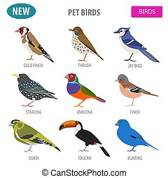 Pet birds collection, breeds icon set flat style isolated on...