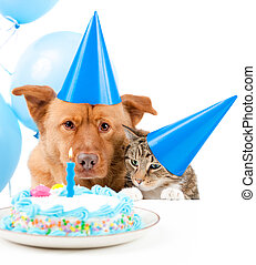 Pet birthday party - Dog and cat Birthday party with cake