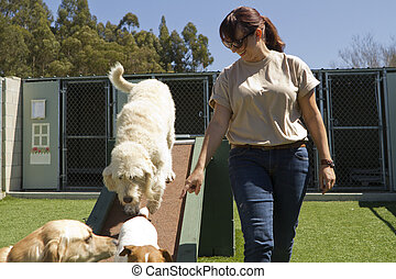 Pet Boarding - A mixed-breed poodle at a pet boarding...