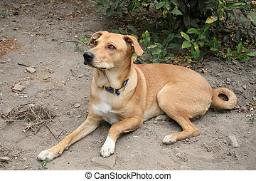 Pet Brown Dog in a Garden