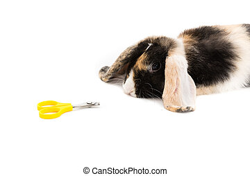 pet care - bunny is not excited by the scissors for cut...