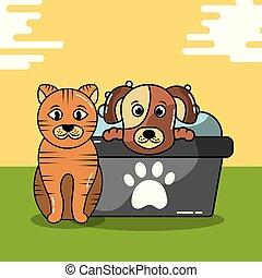 pet cat and dog