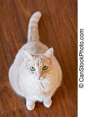 Pet Cat Indoors