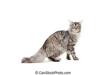 Pet cat - Portrait of sweet pet cat