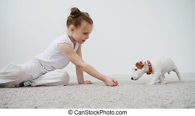 Pet concept. Girl with a little cute dog Jack Russell...