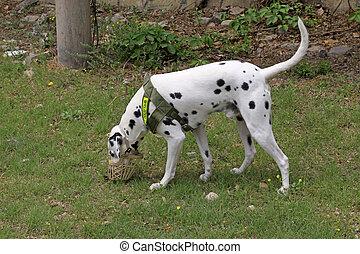 pet dalmatians on the ground