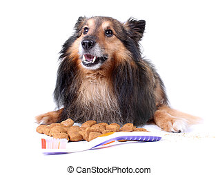 Pet dental care - Small furry Sheltie laying with food that...