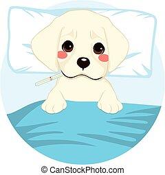 Pet Dog Ill