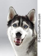 Pet dog smiling towards camera.