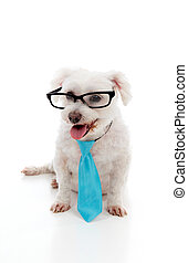 Pet dog wearing a tie and glasses