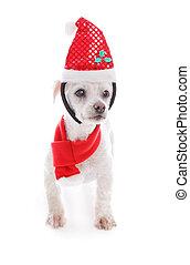 Pet dog wearing  Christmas headband and scarf