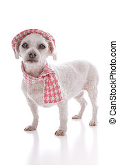 Pet dog wearing winter hat and scarf