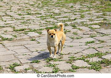 Pet dogs in the broken ground