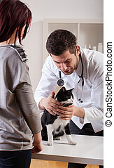 Pet during medical appointment