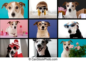 Collage of videos with funny creatures talking to each other online in the form of a call. Dog in different costumes and on different backgrounds depicts different characters