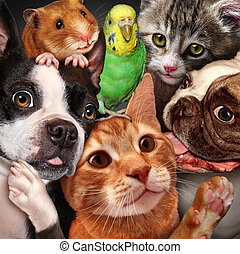 Pet Group - Pet group concept as dogs cats a hamster and...