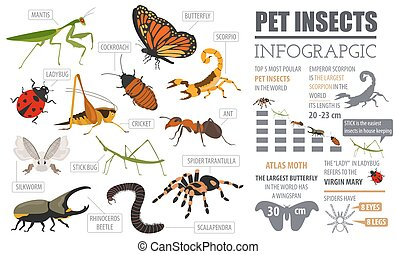 Pet insects breeds icon set flat style isolated on white....