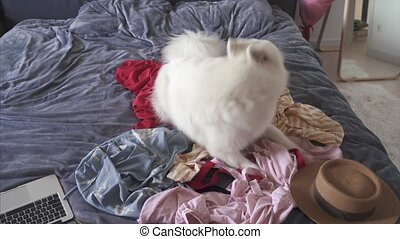 Pet made a mess on the bed in the bedroom, close angle