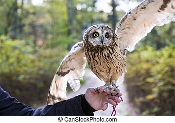 Pet Owl sitting on the hand