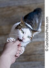 Pet owner feeding treats to a playful tabby cat. Personal perspective.