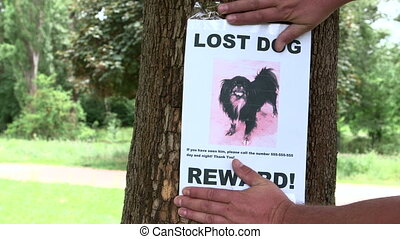 Pet owner put up poster Lost Dog throughout the neighbourhood offering a reward