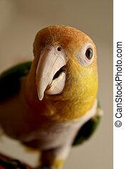 Pet Parrot 3