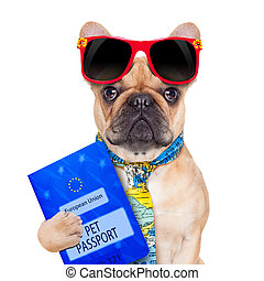 pet passport - fawn bulldog with passport immigrating or...