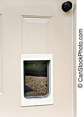 Pet Portal in a Door - A small animal access installed in a...