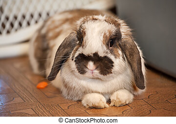 Spotted pet rabbit lies on tile floor, selective focus on the eyes