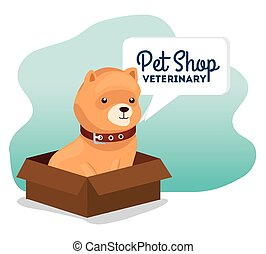 pet shop veterinary with little dog in box carton